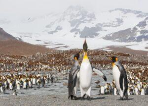 Pingvinene står i kø for en dusj av ferskvann, fotokunst veggbilde / plakat av Kjell Erik Moseid