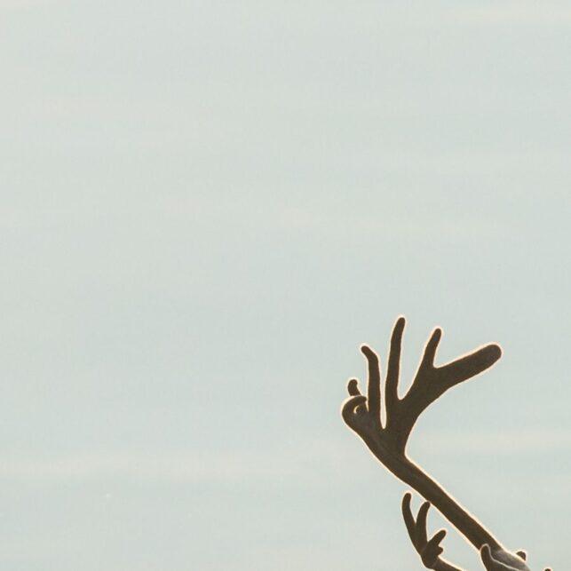 Tre storbukker i reinsfjellet, fotokunst veggbilde / plakat av Kjell Erik Moseid