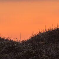 Rypestegg i midnattsol III, fotokunst veggbilde / plakat av Kjell Erik Moseid