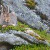 Fra ei steinhelle med krekling har haren oversikten, fotokunst veggbilde / plakat av Kjell Erik Moseid