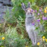Hare i sommerenga av Kjell Erik Moseid