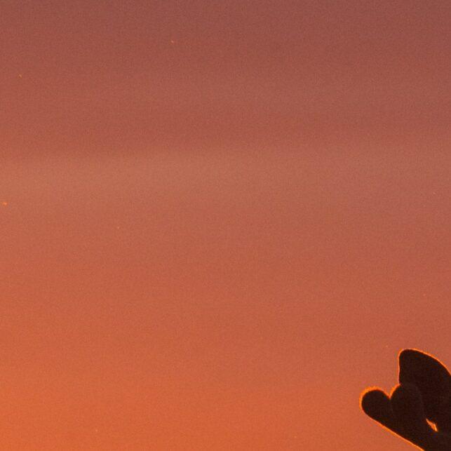 Rundt midnatt kommer elgen ut for å beite mens sola farger himmelen, fotokunst veggbilde / plakat av Kjell Erik Moseid