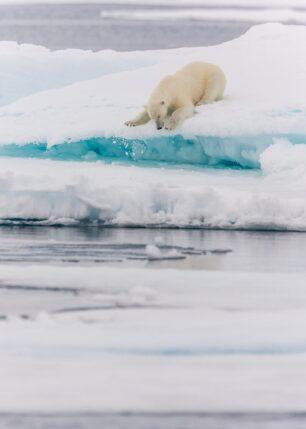 En isbjørn aker ned fra ei isblokk etter å ha speidet etter sel, fotokunst veggbilde / plakat av Kjell Erik Moseid