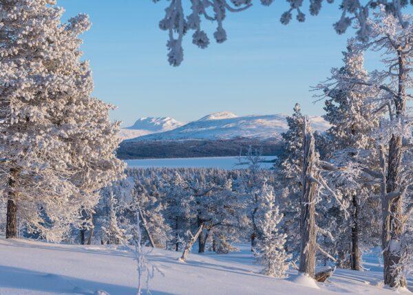 Rimkledd fjellskog med puddersnø, fotokunst veggbilde / plakat av Kjell Erik Moseid