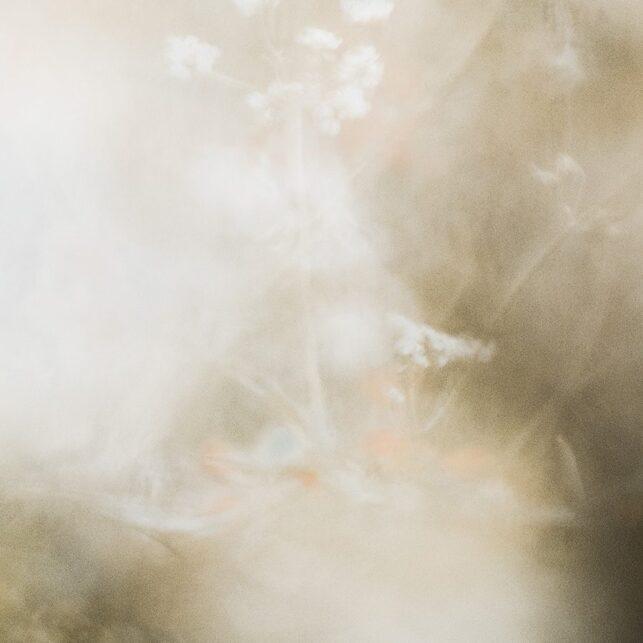 Portrett av ei rådyrgeit i blomstereng, fotokunst veggbilde / plakat av Kjell Erik Moseid