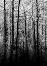 Frossent tre i vinterlandskap, fotokunst veggbilde / plakat av Kristoffer Vangen