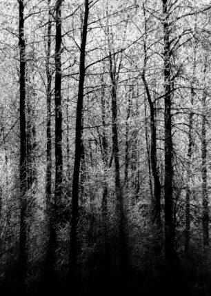 Morgenfrost, fotokunst veggbilde / plakat av Kjell Erik Reinhardtsen