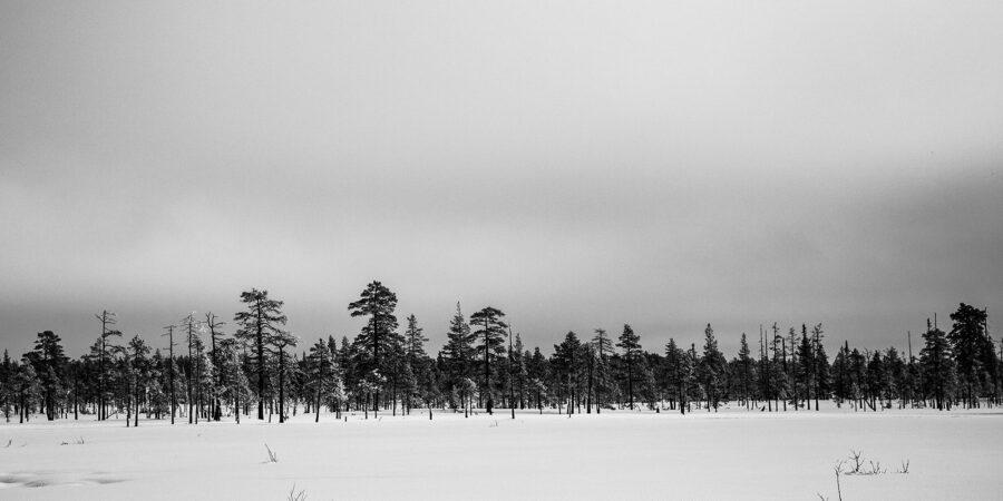 Snødekt myr av Kjell Erik Reinhardtsen
