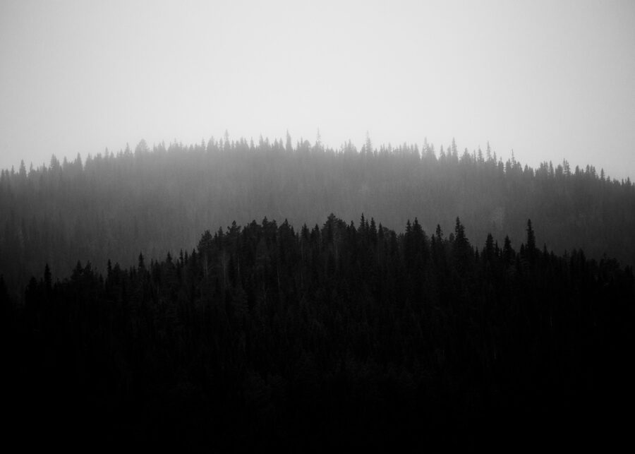 Trollskog II av Kjell Erik Reinhardtsen