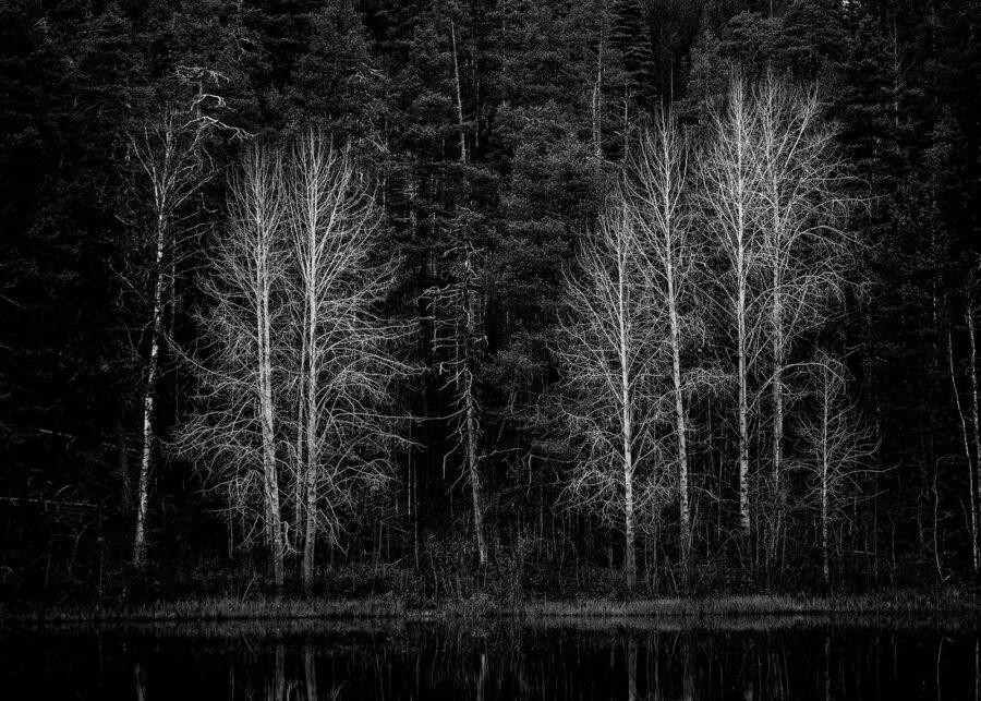 Hvite trær av Kjell Erik Reinhardtsen