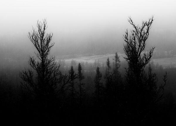Mørk myr, fotokunst veggbilde / plakat av Kjell Erik Reinhardtsen