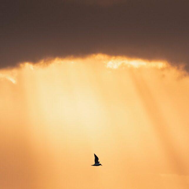 Fugl i sollys, fotokunst veggbilde / plakat av Kristoffer Vangen