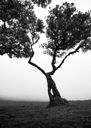 Mystisk Tre, fotokunst veggbilde / plakat av Kristoffer Vangen