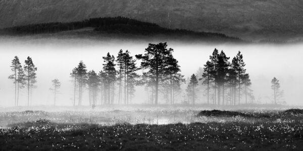 Trerekken, fotokunst veggbilde / plakat av Kristoffer Vangen
