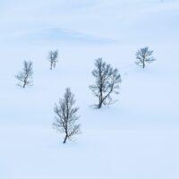 Trær i snødekt landskap, fotokunst veggbilde / plakat av Kristoffer Vangen