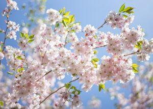 Vårblomster 2, fotokunst veggbilde / plakat av Magne Tveiten
