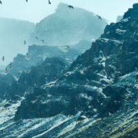Fuglefjell på Spitsbergen -Limited Edition, fotokunst veggbilde / plakat av Peder Aaserud Eikeland