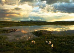 Vei over vannet ved Haukeli i solnedgang, fotokunst veggbilde / plakat av Tor Arne Hotvedt