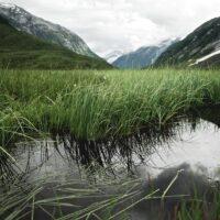 Refleksjoner i fjellmyr, fotokunst veggbilde / plakat av Peder Aaserud Eikeland