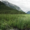 Refleksjoner i fjellmyr av Peder Aaserud Eikeland