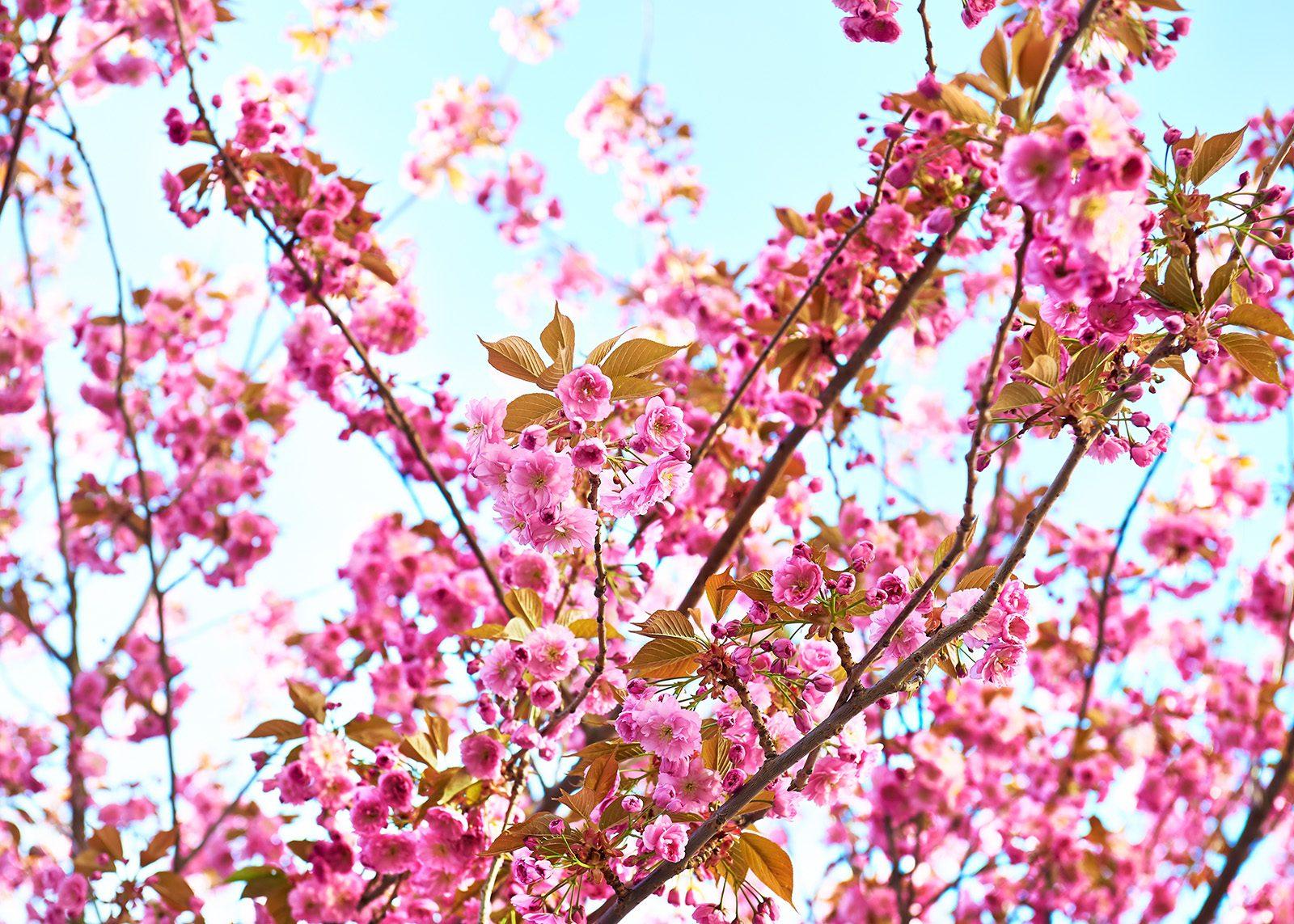 I rosenträdgården dikt