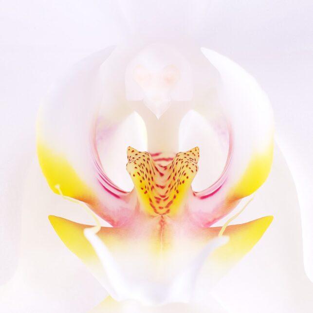 Hvit orkidé av Peder Aaserud Eikeland