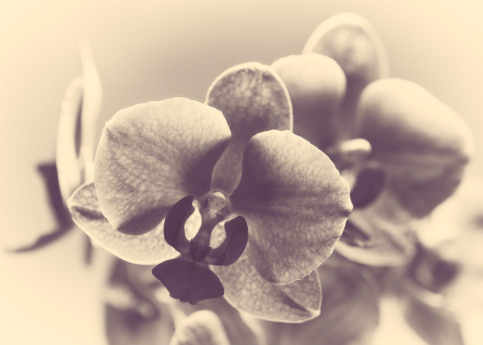 Retro orkide av Peder Aaserud Eikeland