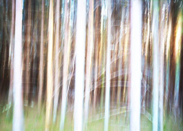 Abstrakt glødende skog, fotokunst veggbilde / plakat av Peder Aaserud Eikeland