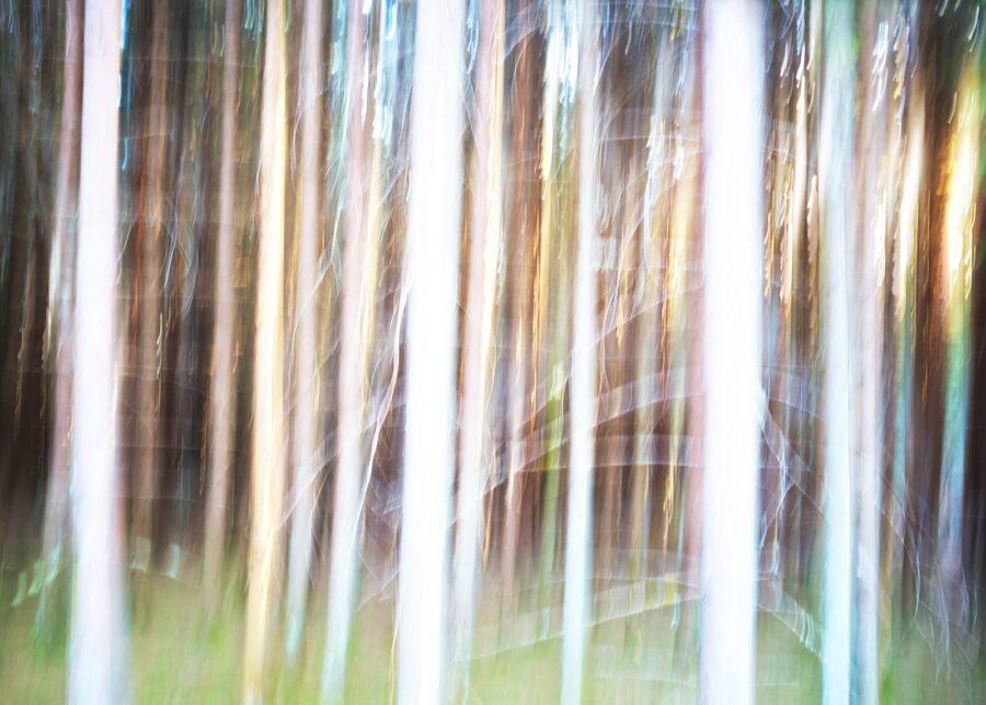 Abstrakt glødende skog av Peder Aaserud Eikeland