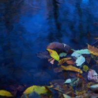 Høstfarger i vannkanten, fotokunst veggbilde / plakat av Peder Aaserud Eikeland