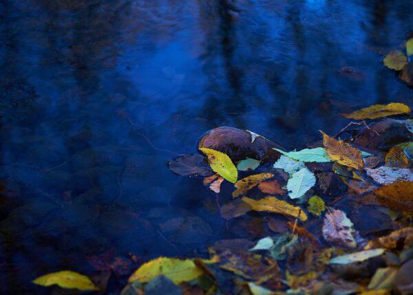 Høstfarger i vannkanten av Peder Aaserud Eikeland