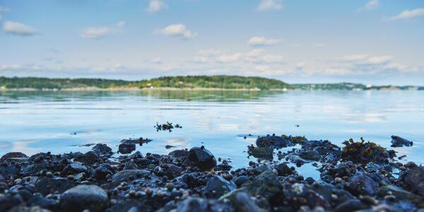 Detaljer i vannkanten, fotokunst veggbilde / plakat av Peder Aaserud Eikeland