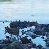 Detaljer i vannkanten av Peder Aaserud Eikeland