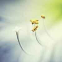 Blomsterstøv av Peder Aaserud Eikeland
