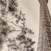 Eiffeltårnet innrammet av Peder Aaserud Eikeland