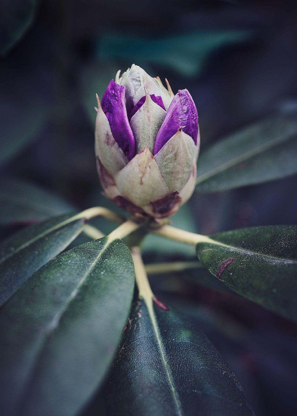 Lukket blomst av Peder Aaserud Eikeland