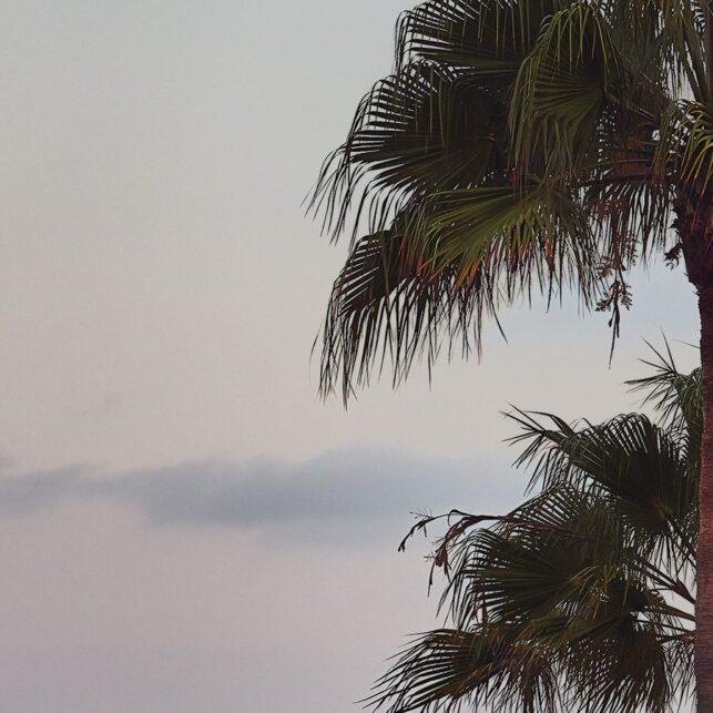 Laguna beach palmer, fotokunst veggbilde / plakat av Peder Aaserud Eikeland