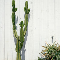 San Diego old town cactus, fotokunst veggbilde / plakat av Peder Aaserud Eikeland