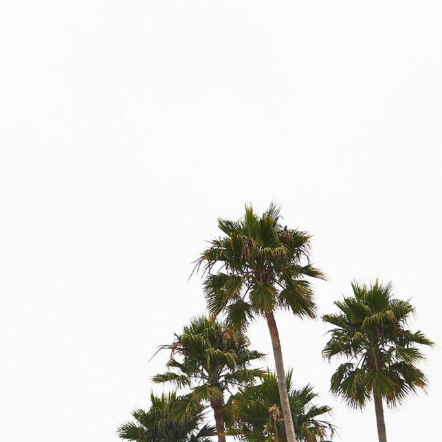 Santa Cruz beach boardwalk, fotokunst veggbilde / plakat av Peder Aaserud Eikeland