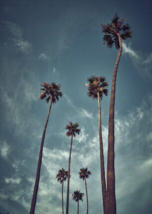 Laguna beach skyhøye palmer, fotokunst veggbilde / plakat av Peder Aaserud Eikeland