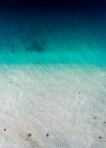 10 commersons delfiner i ei bølge nær stranden, fotokunst veggbilde / plakat av Kjell Erik Moseid