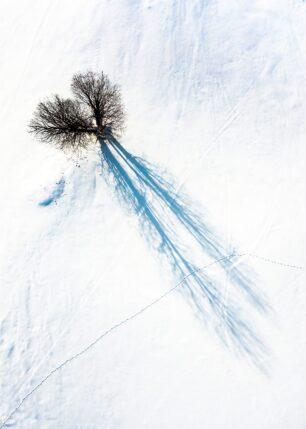 Spor fra dyr som har krysset et snødekt område., fotokunst veggbilde / plakat av Sindre Krane Olsen