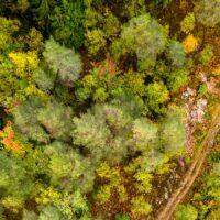 En sti inne i en skog., fotokunst veggbilde / plakat av Sindre Krane Olsen