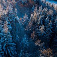 Tretopper dekket av snø. , fotokunst veggbilde / plakat av Sindre Krane Olsen