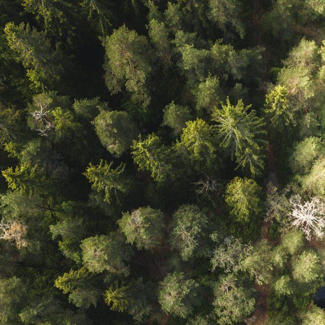 Dronebilde over Svartkulp ved Sognsvann, fotokunst veggbilde / plakat av Tor Arne Hotvedt