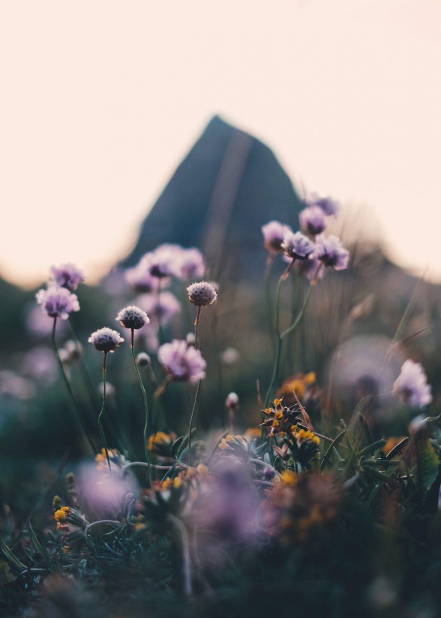 Blomster på Mølen av Tor Arne Hotvedt