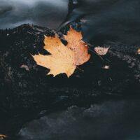 Langeksponeringsbilde av en elv med et høstblad, fotokunst veggbilde / plakat av Tor Arne Hotvedt