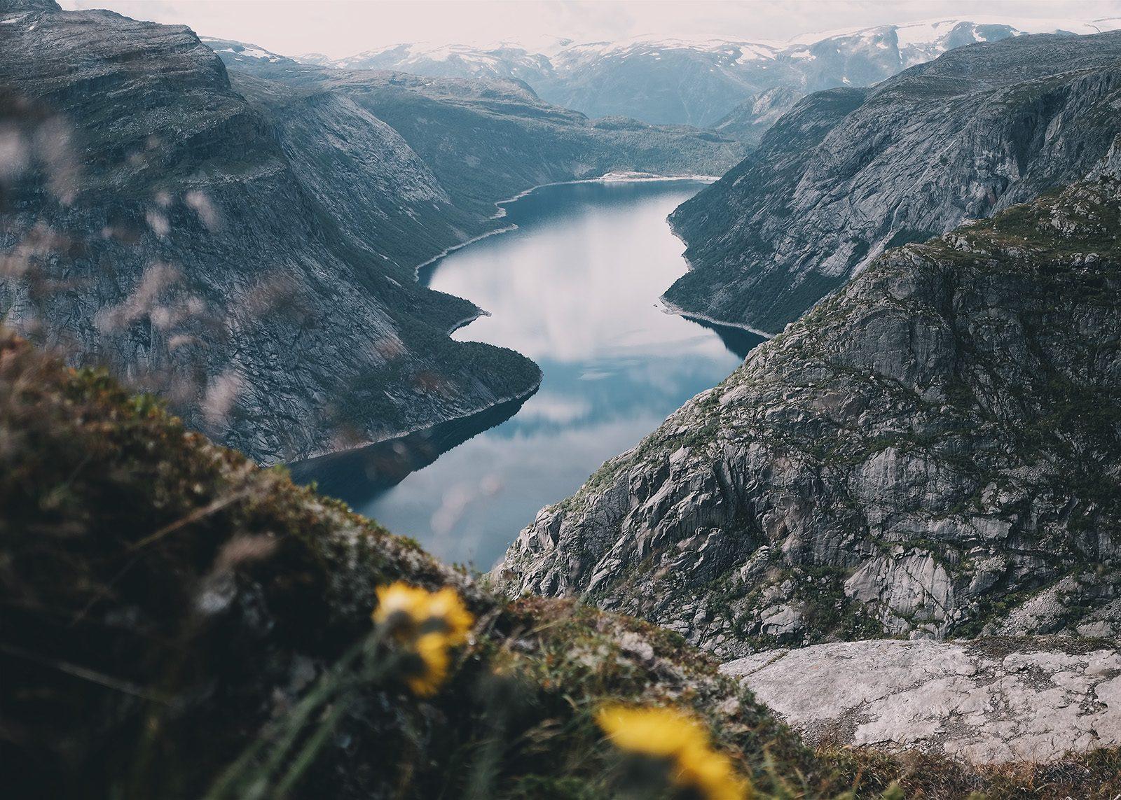 Blomster og fjell av Tor Arne Hotvedt