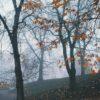 Tåke og trær, fotokunst veggbilde / plakat av Tor Arne Hotvedt