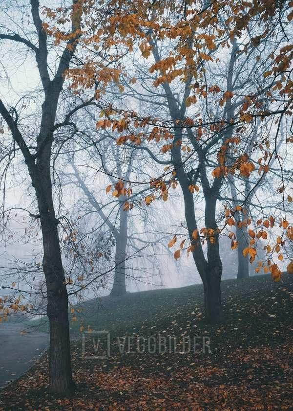 Mystisk skog av Tor Arne Hotvedt